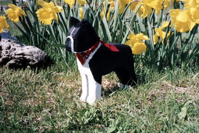 boston-terrier_jpg